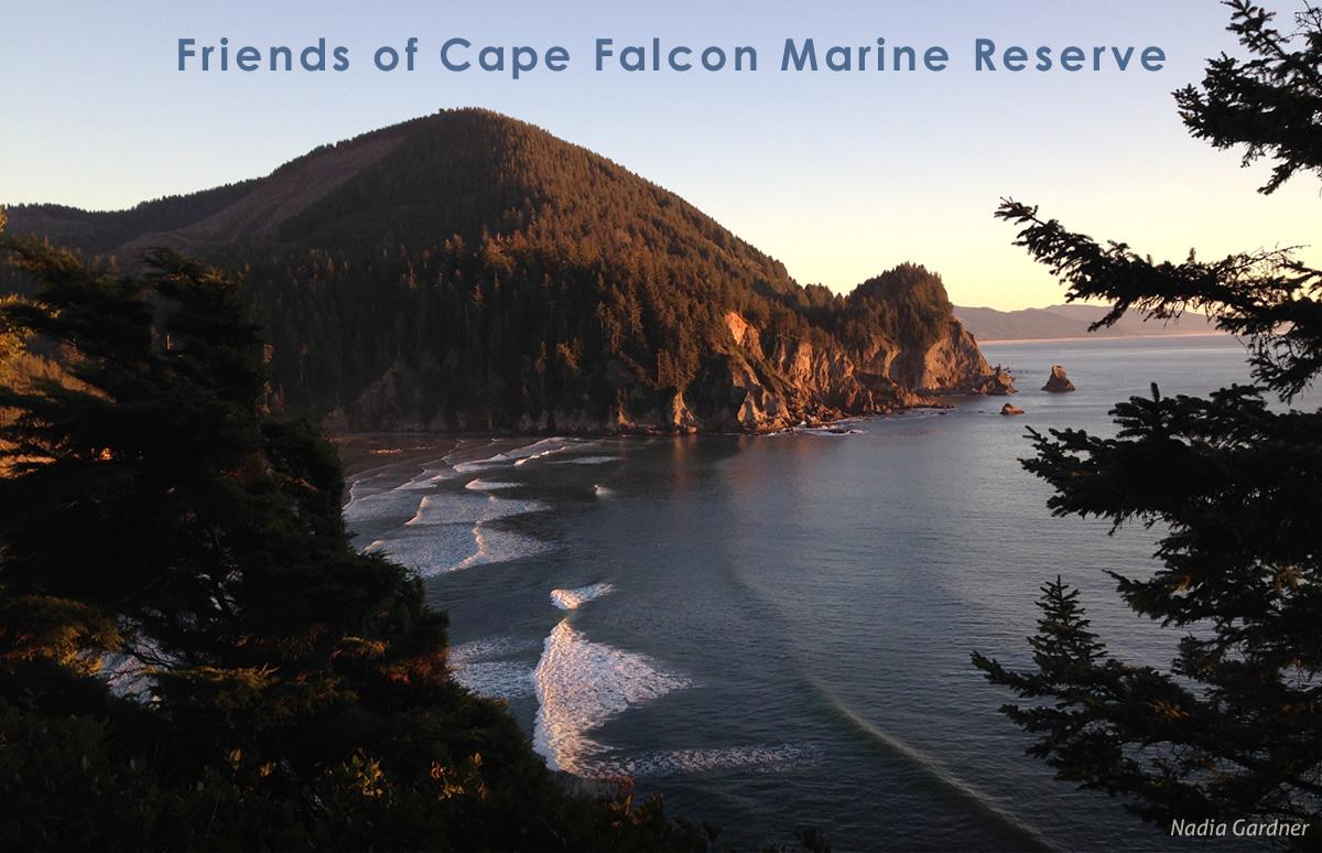 Friends of Cape Falcon Marine Reserve