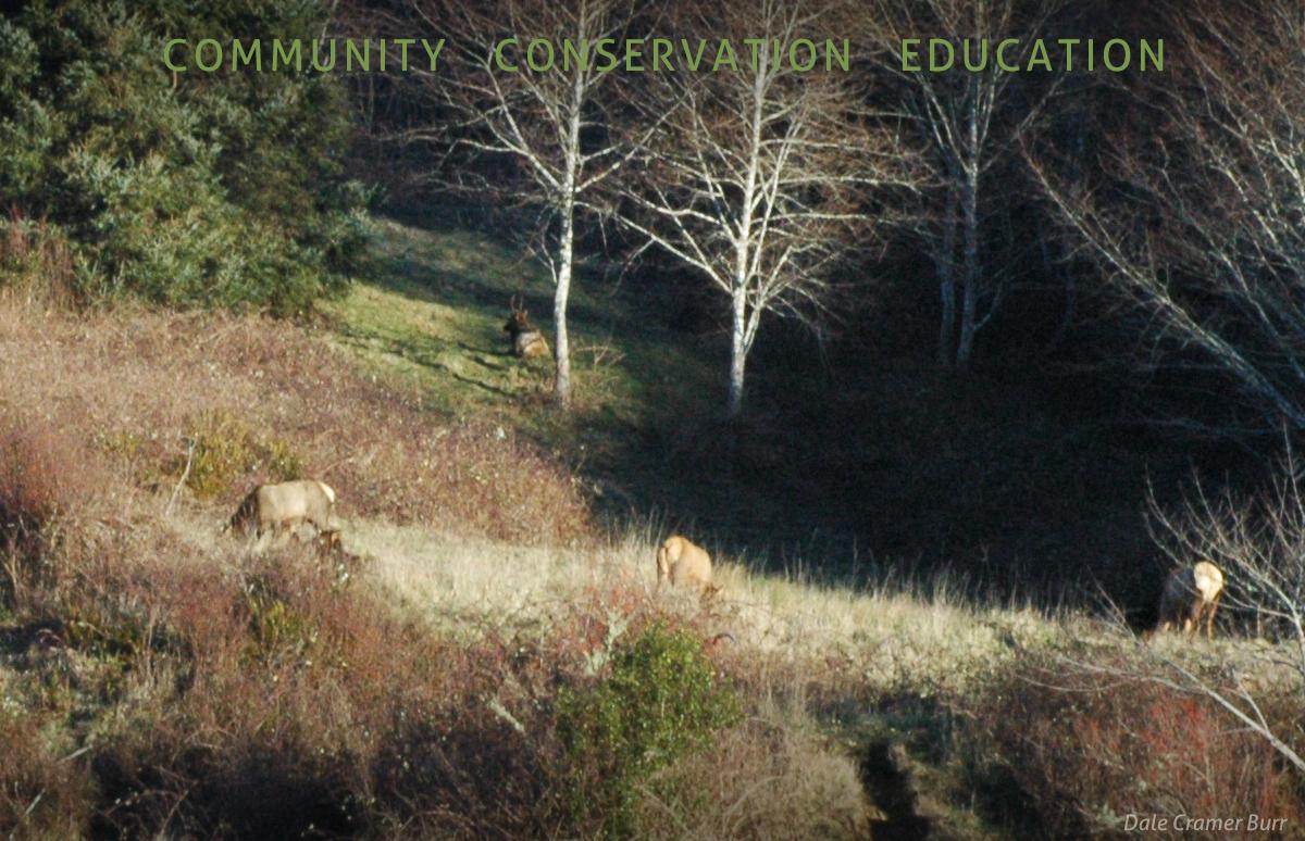 Elk at ACF